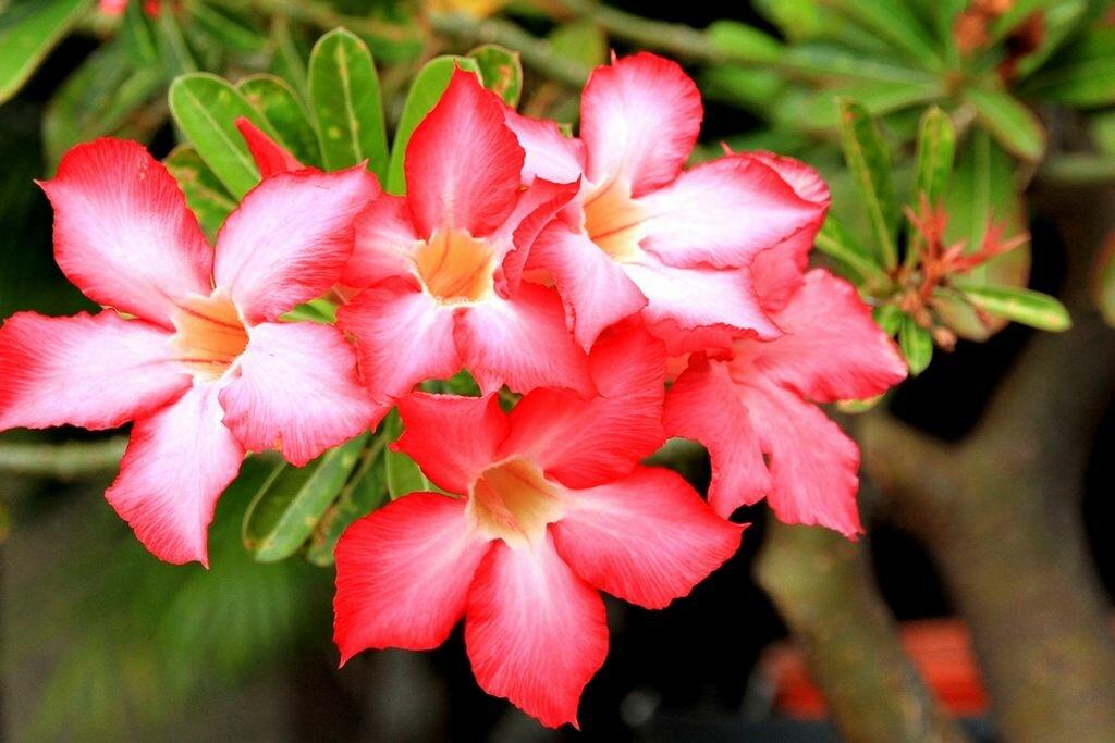 Цветы для вашего здоровья+