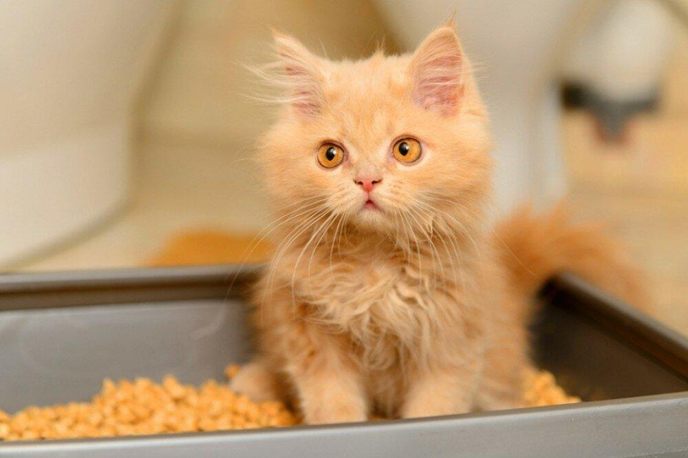 Аксессуары для кошек. Выбираем туалет